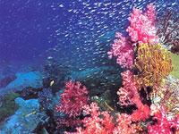 Чудеса підводного світу маріанських